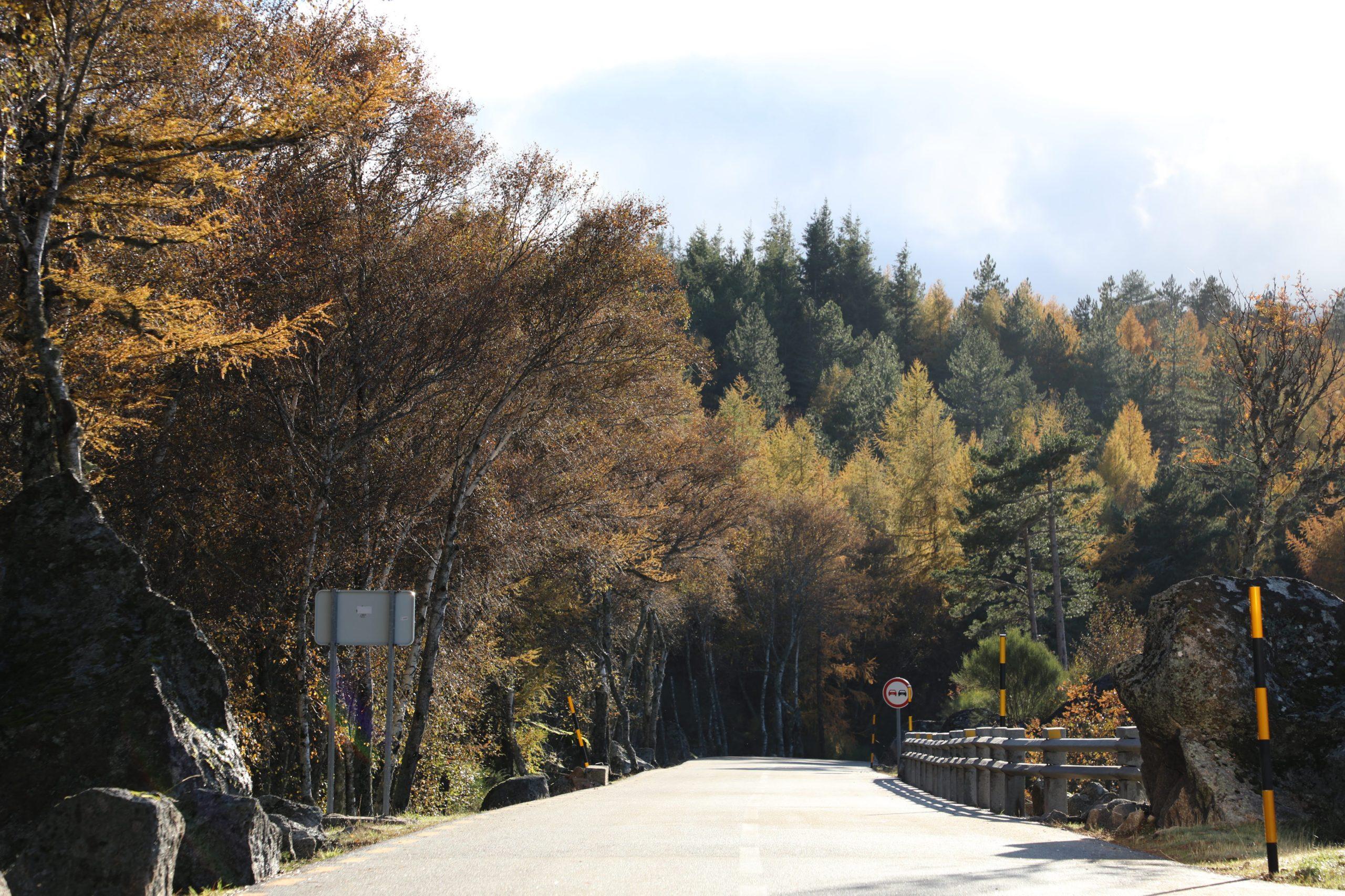 Árvores numa estrada